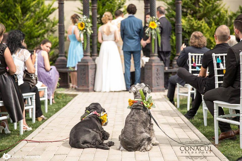 nunta vara conacul heldsdorf